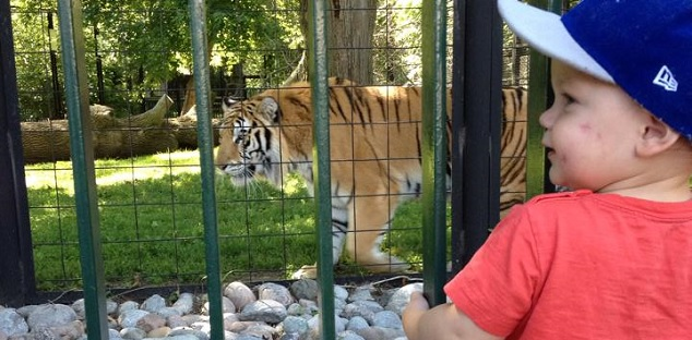 BOWMANVILLE ZOO TIGER