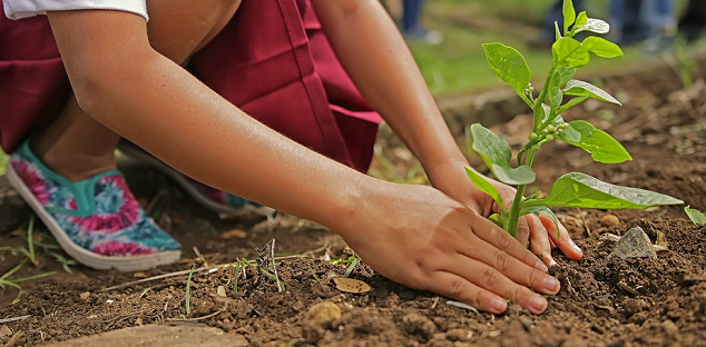 Free plants, shrubs and seedlings up for grabs for people living in rural Clarington