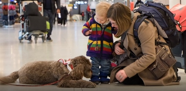 Therapy dogs coming to Pearson airport