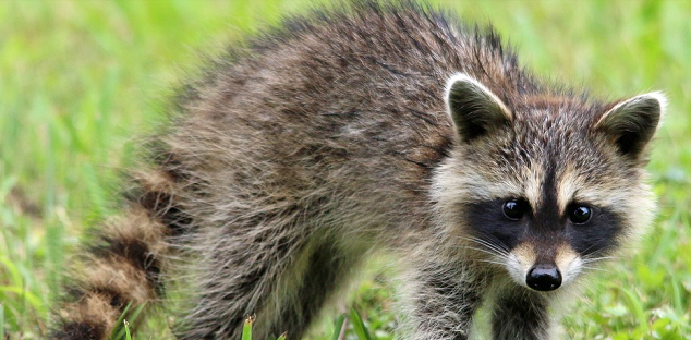Durham Region Health Department reminding you to protect yourself and your pets from rabies